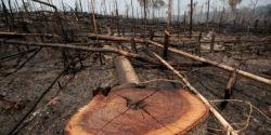 Indígenas do Brasil e da Colômbia processam controladora do GPA por destruição da Amazônia